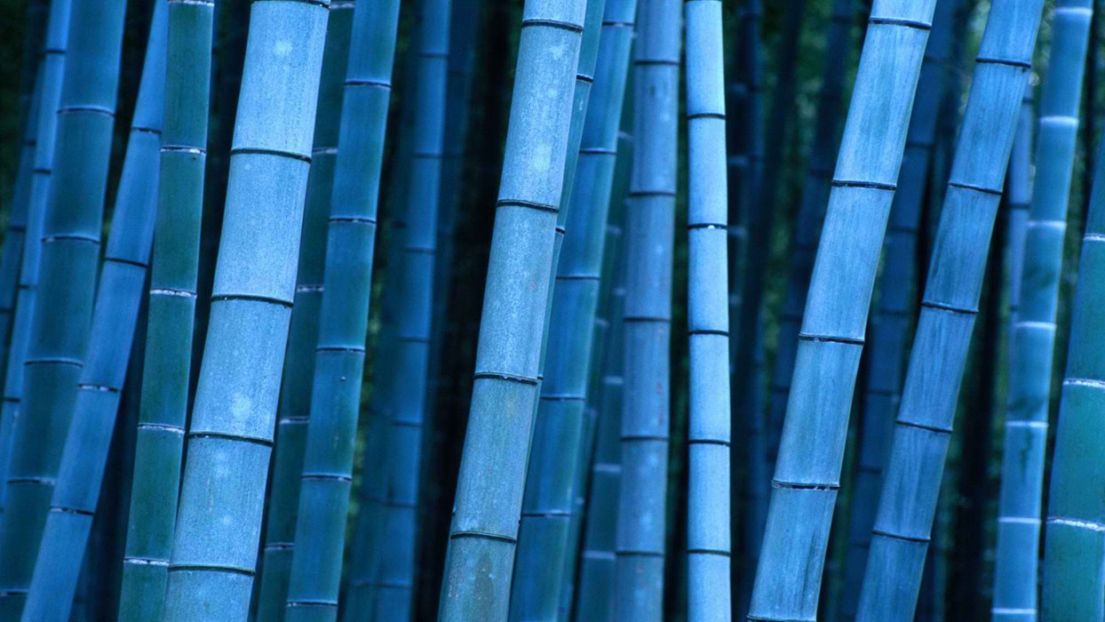 blue_bamboos