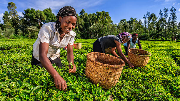 Germany's development institution floats investment program for African agritech startups